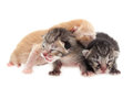 Baby cats family group of on white background Royalty Free Stock Photos