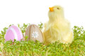 Baby chicken easter eggs grass isolated white Royalty Free Stock Photos