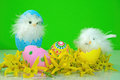 Baby chicks in forsythia with easter eggs and Stock Images