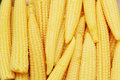 Baby corn arranged Royalty Free Stock Image