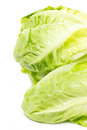 Baby cos lettuce close up of Stock Image