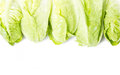Baby cos lettuce frame Royalty Free Stock Photography