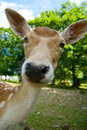 Baby deer Royalty Free Stock Images