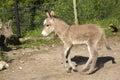Baby Donkey Foal