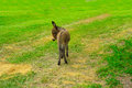 Baby donkey in the middle of the field Royalty Free Stock Photos