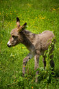 Baby donkey in nature natural background Stock Photo