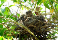Baby doves or zebra or morning Royalty Free Stock Photos