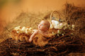 Baby in easter nest child lies an with chicks Stock Photography