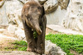 Baby elephant in chiangmai zoo thailand northen Royalty Free Stock Photos