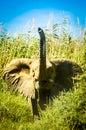 Baby elephant hello a namibian Royalty Free Stock Photos