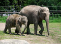 Baby Elephant and his Mom at the Zoo Royalty Free Stock Photos