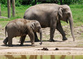 Baby Elephant and his Mom at the Zoo Stock Photo