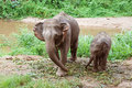 Baby elephant with his mother Royalty Free Stock Image