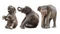 Baby elephant isolated Royalty Free Stock Photo