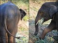Baby elephant Royalty Free Stock Photo