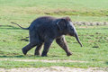 Baby elephant running a across a grass field Stock Images