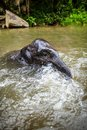 Baby elephant sits in waterfall, river Stock Photo