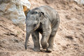 Baby elephant walking through sand and rocks Stock Photo