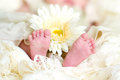 Baby feet with flower Stock Photos