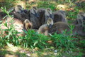 Baby geese relaxing in the shade Royalty Free Stock Photo