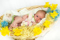 Baby girl inside of basket with spring flowers. Royalty Free Stock Photo