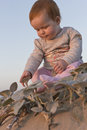Baby girl sitting on the beach touching plants a and Stock Photo