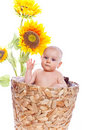 Baby girl in sunflowers Royalty Free Stock Photo