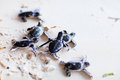 Baby green turtles Royalty Free Stock Image