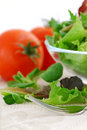Baby greens and tomatoes Royalty Free Stock Photos