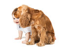 Baby hides behind the dog joyful Stock Images