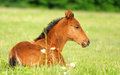 Baby horse. 1 day Stock Photo
