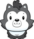 Baby Husky Puppy Royalty Free Stock Photography