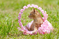 Baby kitten in a basket little on green grass Stock Photography