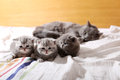 Baby kittens first days of life lying in the bed with her mom Stock Photos