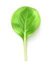 Baby leaf salad
