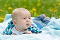 Baby lying on a blanket little boy in the summer green meadow Stock Image