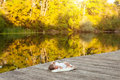 Baby lying on the blanket on pier hext to the river Royalty Free Stock Photo