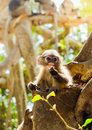 Baby monkey in sunset scene
