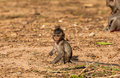 Baby monkeys crab eating macaque cold in morning at the park of thailand Stock Photo