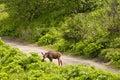 Baby moose Royalty Free Stock Photo