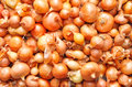 Baby onions Royalty Free Stock Photo