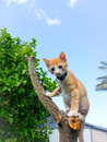 Baby orphan cat clamping on a dead tree Royalty Free Stock Photography