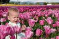 Baby in Pink Tulips Stock Photography