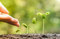 Baby plants seedling hand of a farmer watering growing in germination sequence on fertile soil with natural green background Stock Photo