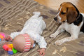 Baby plays with a dog Stock Photography