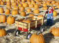 Baby pumpkins Royalty Free Stock Photography