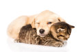 Baby puppy dog and little kitten sleeping together. isolated