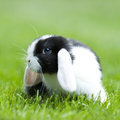 Baby rabbit Stock Photography