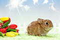 Baby rabbit Stock Images