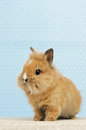 Baby rabbit Royalty Free Stock Photography